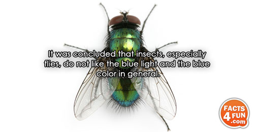 It was concluded that insects, especially flies, do not like the blue light and the blue