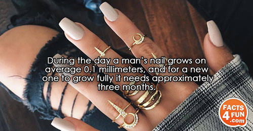 During the day a man's nail grows on average 0.1 millimeters, and for a new one