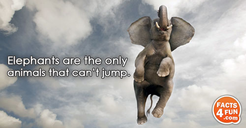 Elephants are the only animals that can't jump.