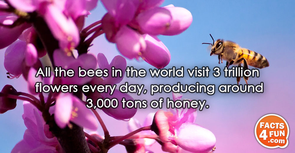 All the bees in the world visit 3 trillion flowers every day, producing around 3,000 tons