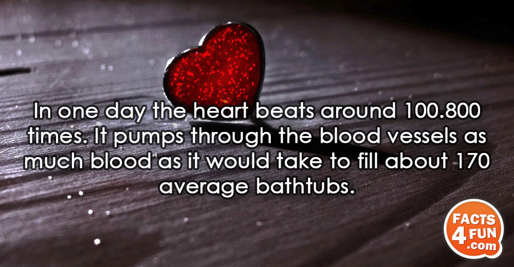 In one day the heart beats around 100.800 times. It pumps through the blood vessels as