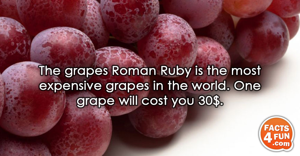 The grapes Roman Ruby is the most expensive grapes in the world. One grape will cost